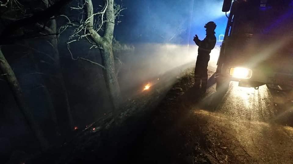 Požar u Podgori, gorjela borova šuma