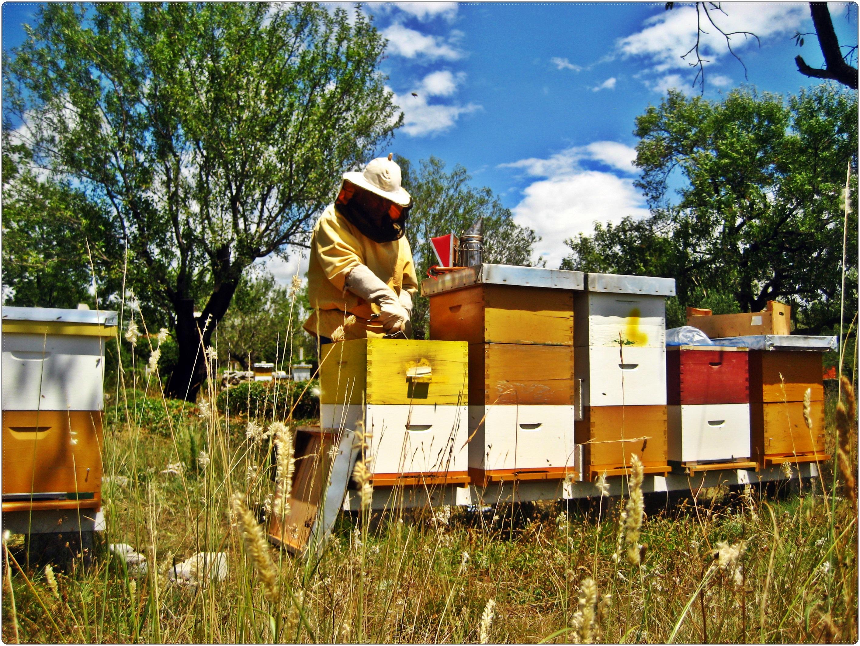 Program strukovnog osposobljavanja za pčelare u Imotskom