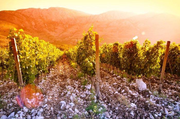 Žilavka iz Vrgorca najbolje vino u Hrvatskoj berbe 2019.